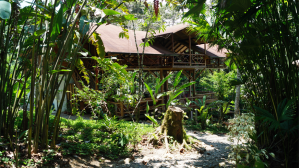 School in the jungle