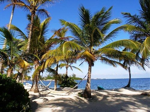 White beaches with palmtrees in Honduras